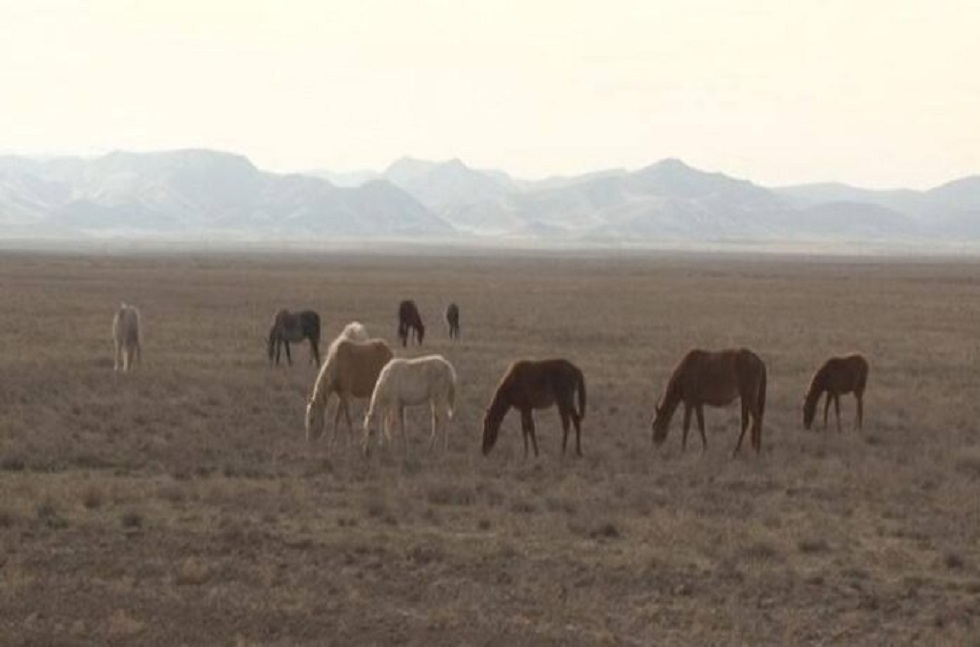 Полиция Туркестанской области задержала группу скотокрадов