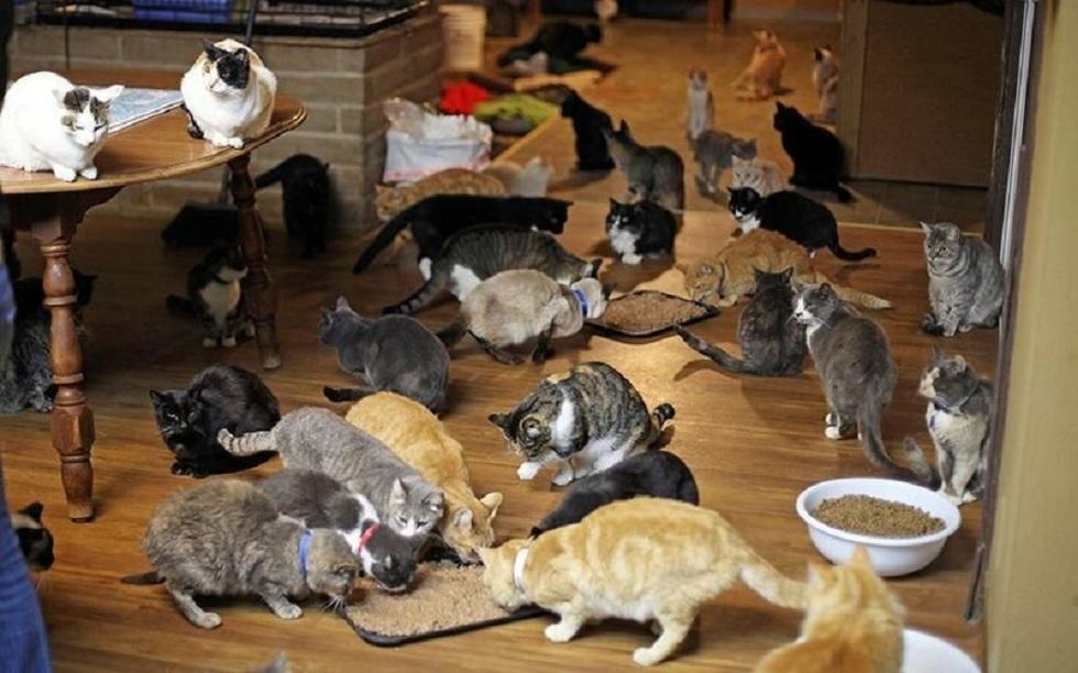 150 кошек приютила у себя дома жительница ОАЭ