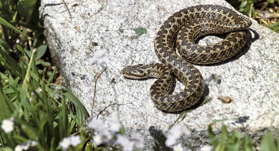 Опасное селфи: подросток из Шымкента попал в больницу за фото со змеей