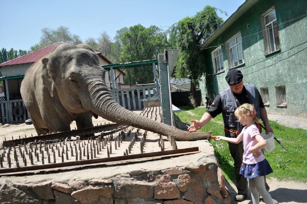 Всемирный день защиты слонов отмечают в Алматинском зоопарке