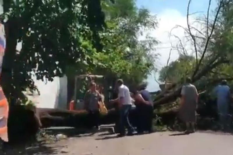 Дерево придавило мать с детьми в Алматы: женщина погибла