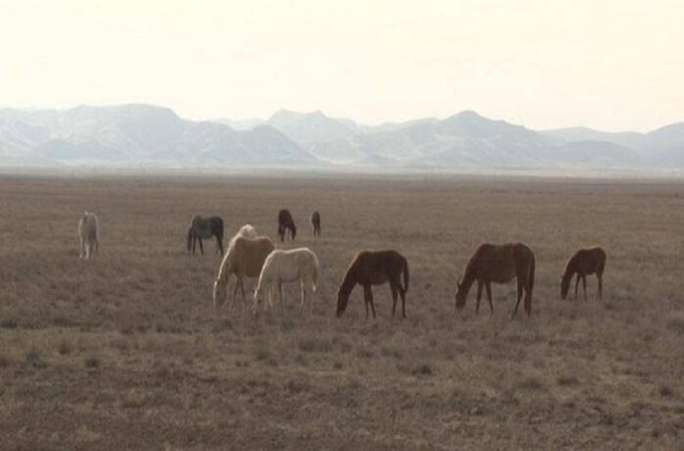 Полицейские Туркестанской области задержали скотокрадов