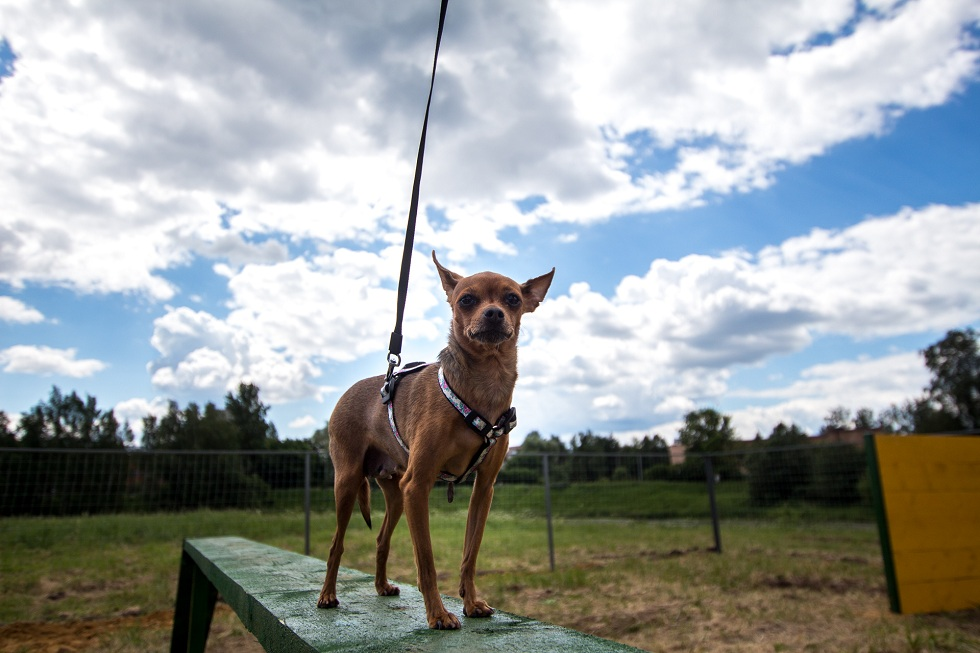 Первая площадка для выгула собак появится в Усть-Каменогорске