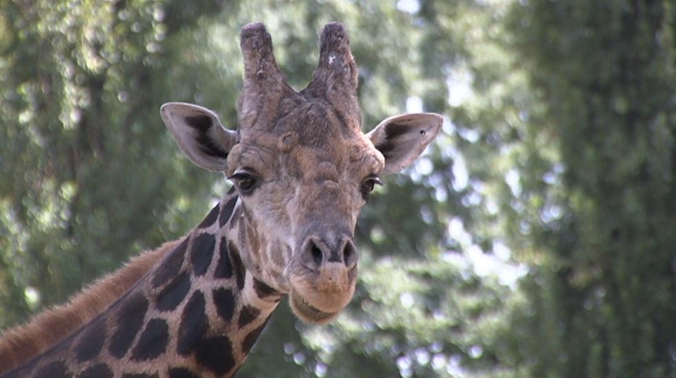 Гибель 6 животных в Алматинском зоопарке: названы причины