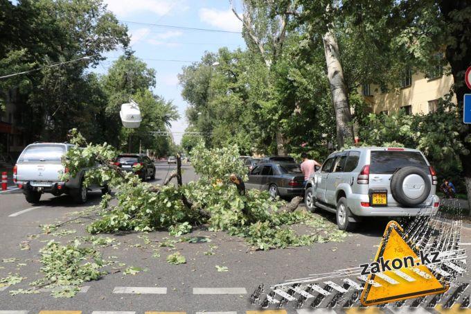 Ветер повредил провода, автомобиль и дерево в Алматы
