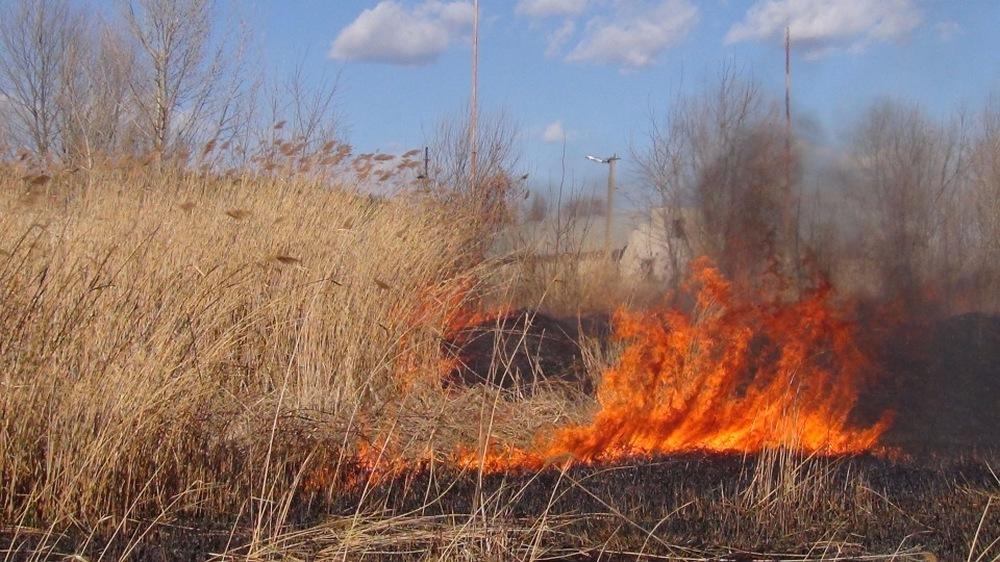Пожары на сухостое участились в Алматы - ДЧС обращается к жителям