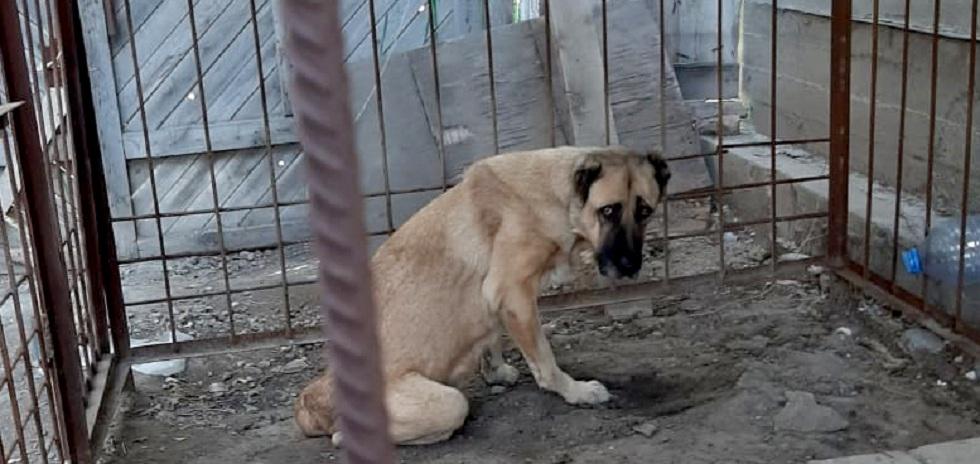 Хатико из Атырау: собака неделю ждала хозяев в степи