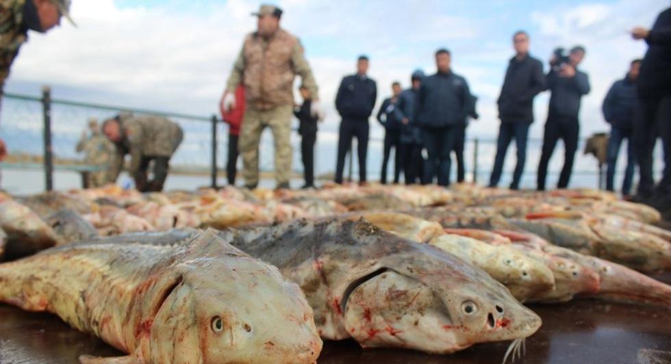 Борьба с браконьерами: инспекторам могут позволить применять оружие
