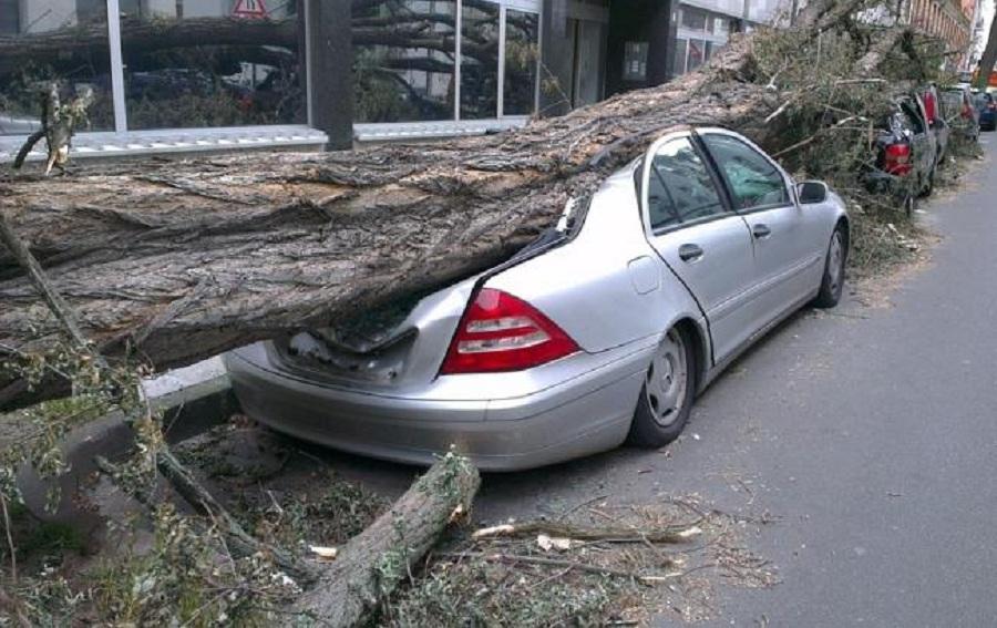 Огромное дерево раздавило машины в Алматы