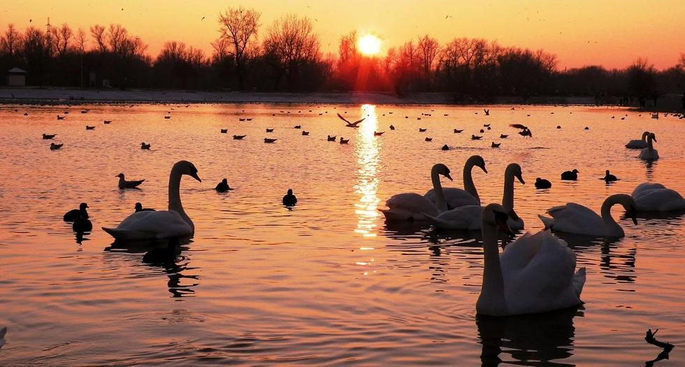 Редкие птицы появились в водоемах Нур-Султана