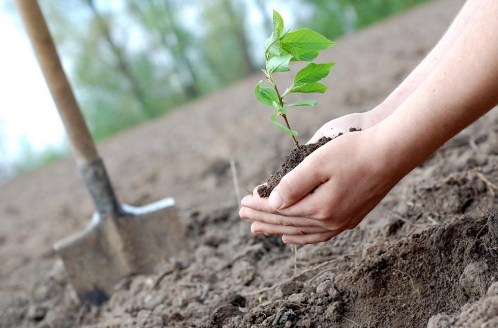 3 тысячи деревьев высадят на Атакенте