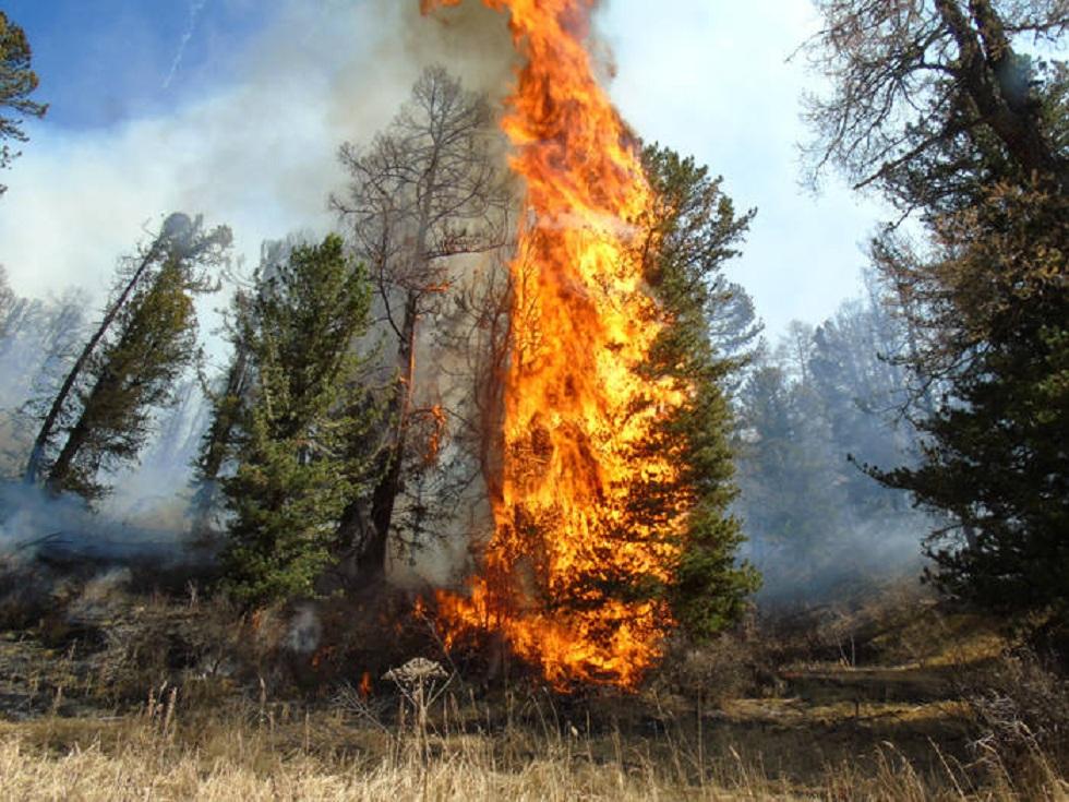 Пожар в Катон-Карагайском парке: ЧС-ники не поверили в версию об НЛО