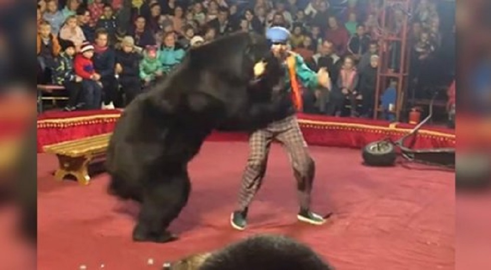 Медведь в цирке напал на дрессировщика