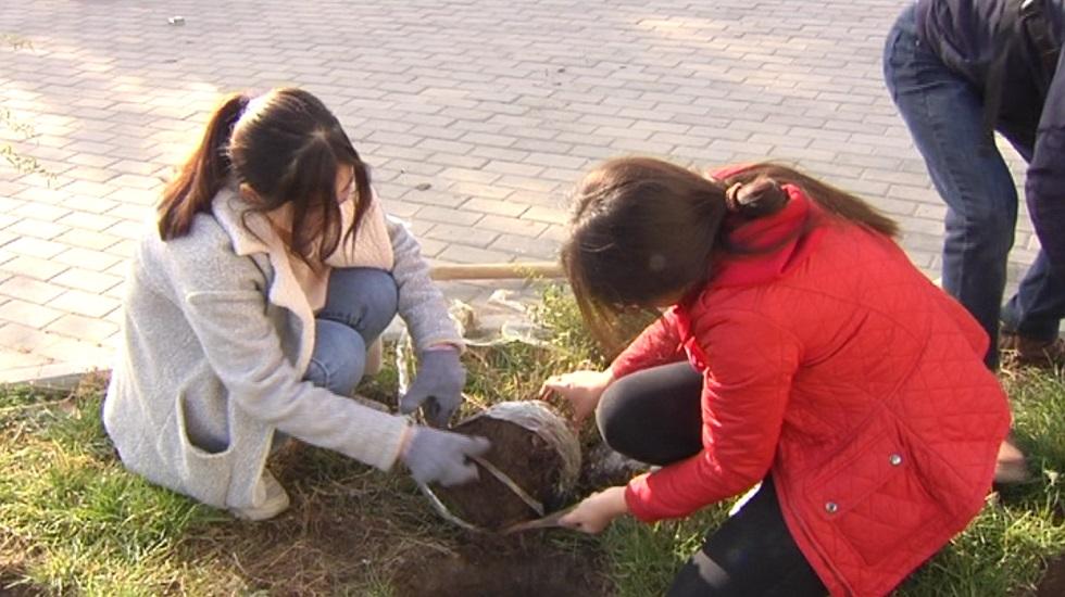 2 тысячи деревьев высадили в Алатауском районе Алматы
