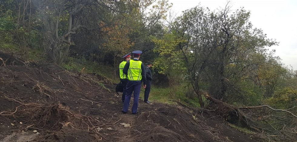 Виновные в вырубке яблонь и краже чернозема в горах Алматы установлены