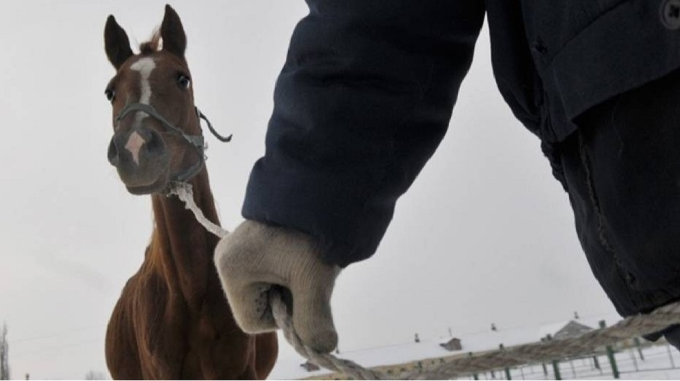 Группу из пяти скотокрадов задержали в Алматинской области