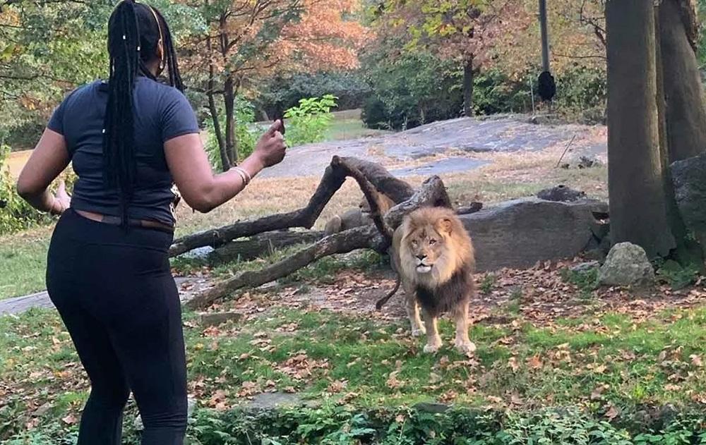 В вольере со львом оказалась американка, поверившая в реинкарнацию (видео)