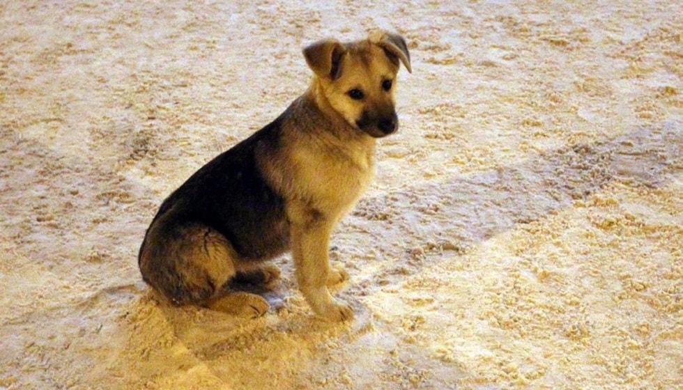 Отстрел бездомных собак - жители Усть-Каменогорска возмущены