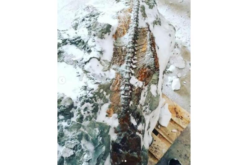 Уникальная находка: останки ископаемой рыбы обнаружили в Костанайской области