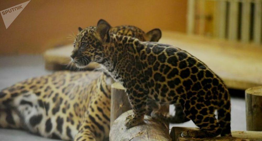 В Алматинском зоопарке появилась Австралия