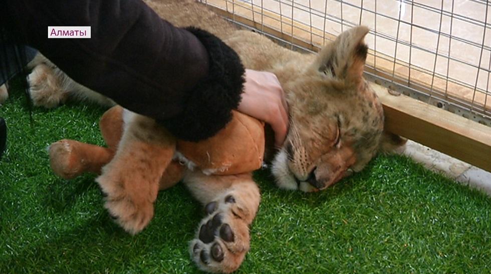 Закрыть все контактные зоопарки в Алматы требуют активисты