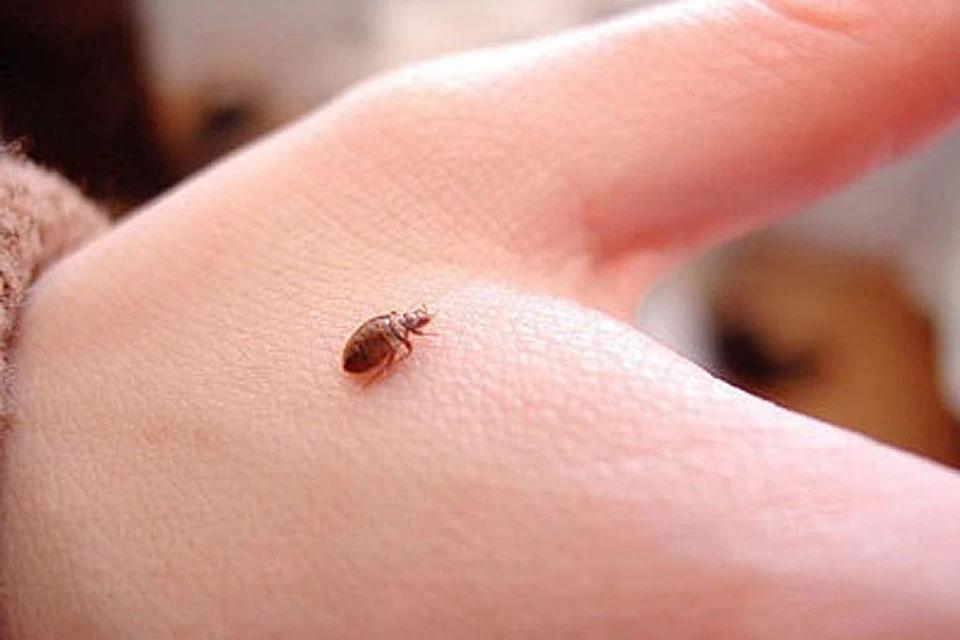 Появился новый вид клопов, разносчиков вирусных инфекций