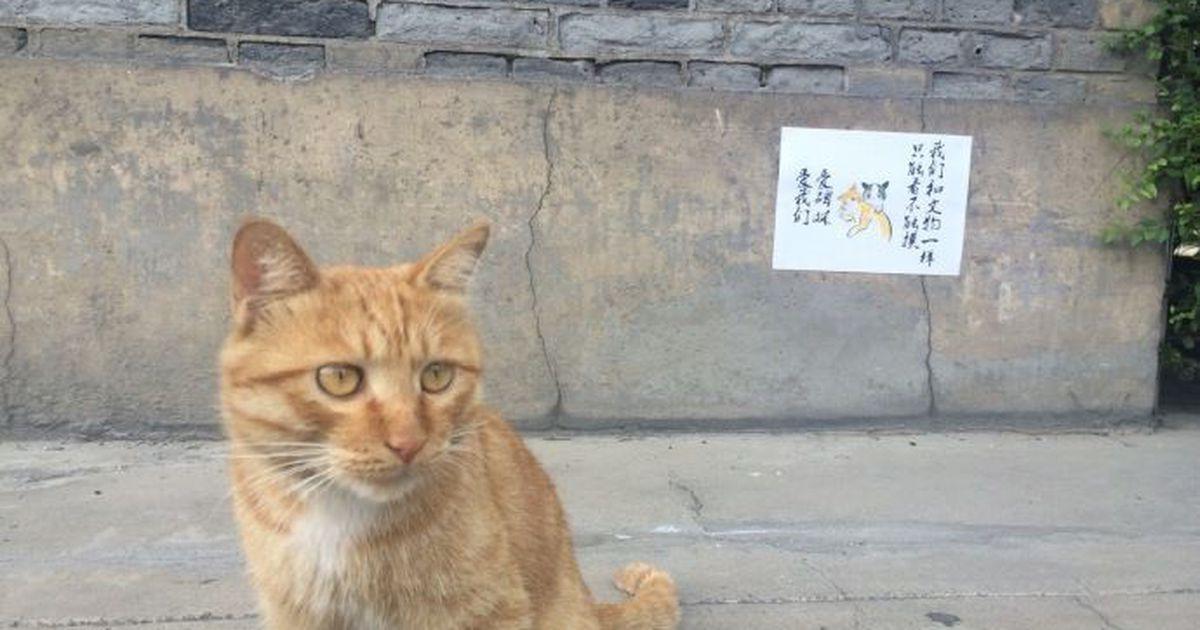 Более миллиона кошек и собак могут погибнуть от голода в Ухане