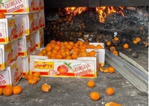 Более тысячи килограммов опасных мандаринов сожгли в Казахстане