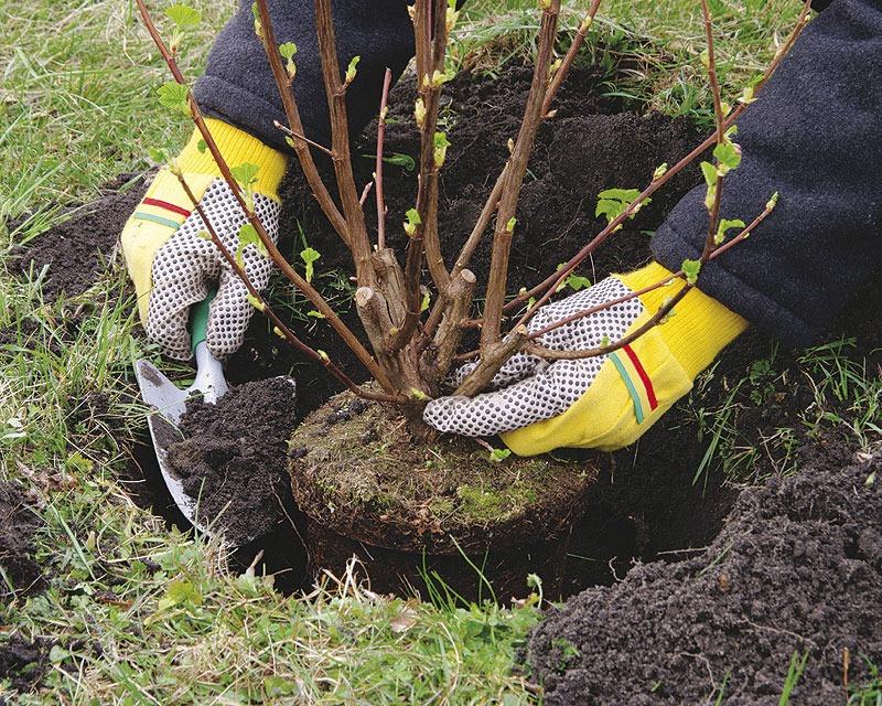 27 миллионов деревьев высадят в память о погибших в Великой Отечественной войне