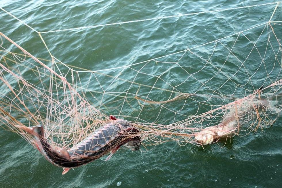 Минивэн с 730 кг рыбы задержали в Алматинской области