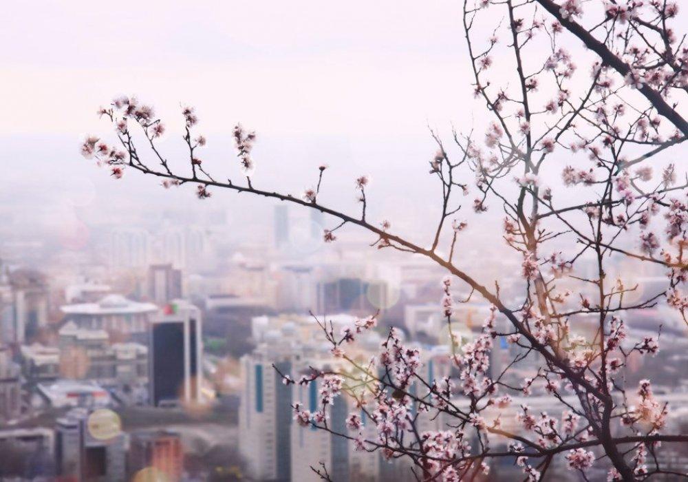 Погода в Алматы с 30 марта по 5 апреля 2020