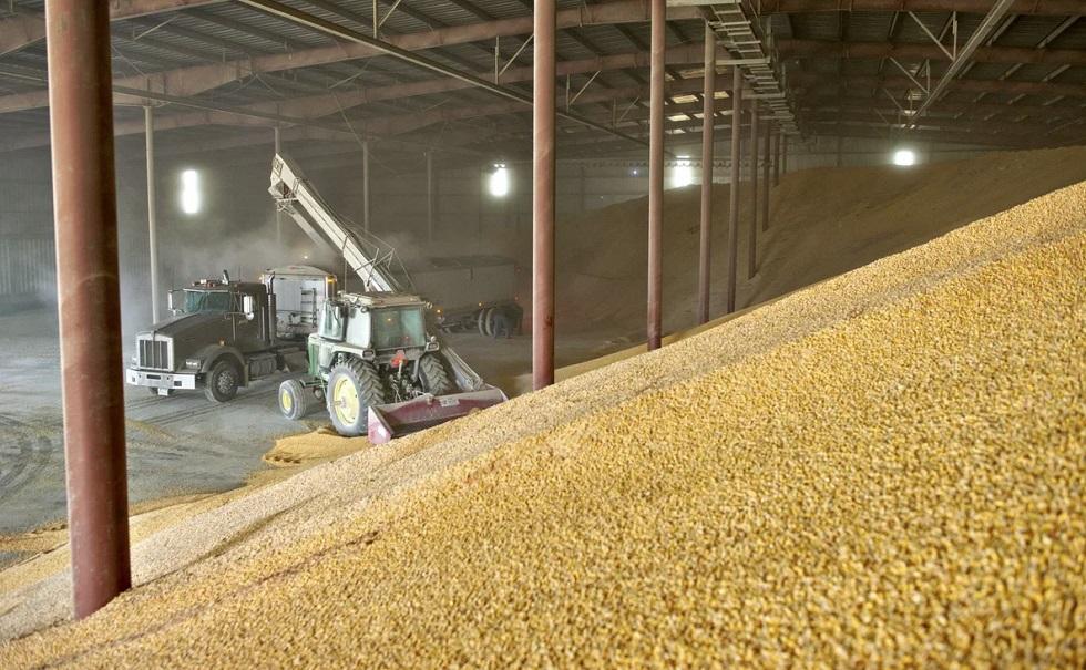 Казахстан прекращает экспорт пшеницы на время режима ЧП