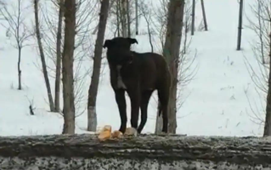 """""""Хатико"""" из Костаная: собака больше двух месяцев ждет своего хозяина на обочине дороги"""