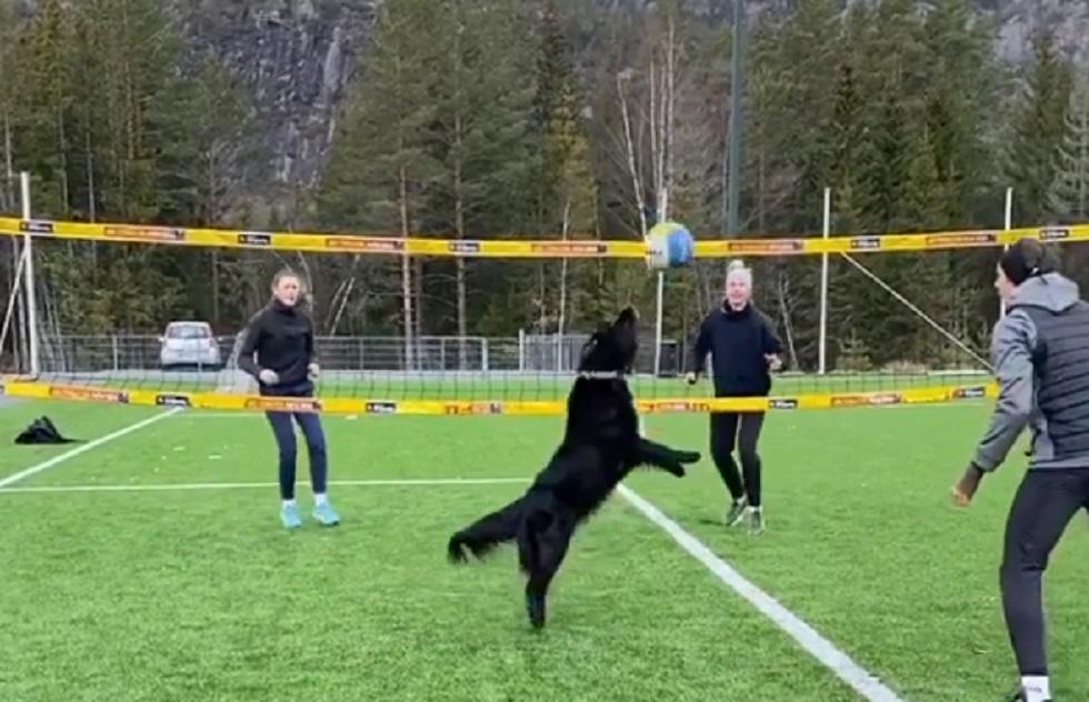 Домашние животные помогают спортсменам тренироваться в изоляции