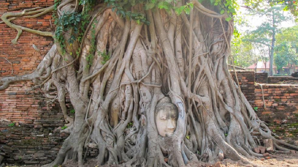 Велосипедный звонок нашли в захоронении тысячелетней давности в Камбодже