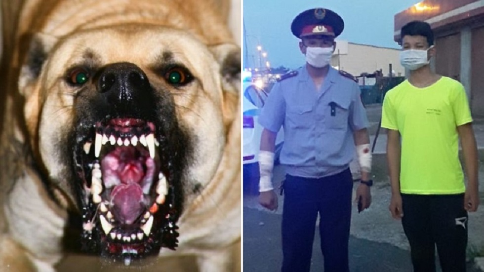 Полицейские пострадали от нападения собаки, но спасли жителей Шымкента