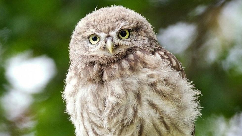 Птенцов филина обнаружили в Иле-Алатауском национальный парке