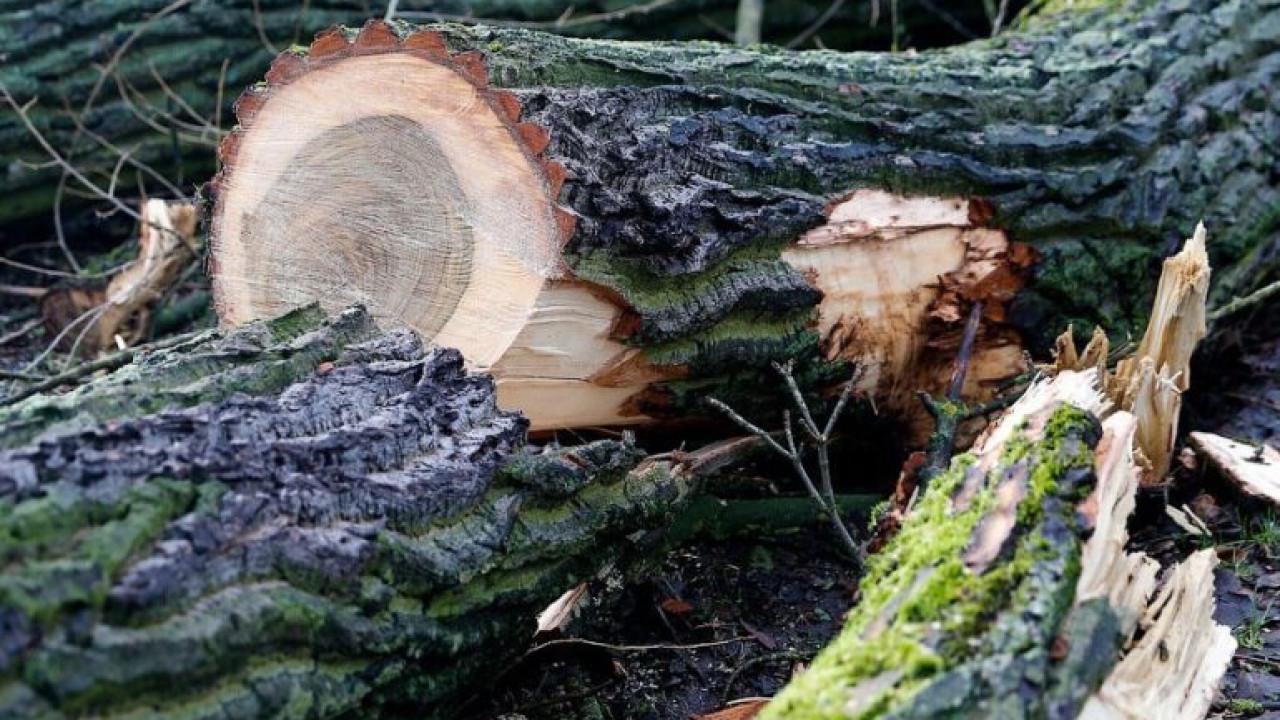 В Павлодарской области упавшее дерево убило 16-летнего парня