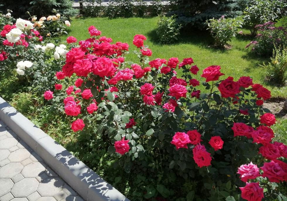 Погода в Алматы с 15 по 21 июня 2020