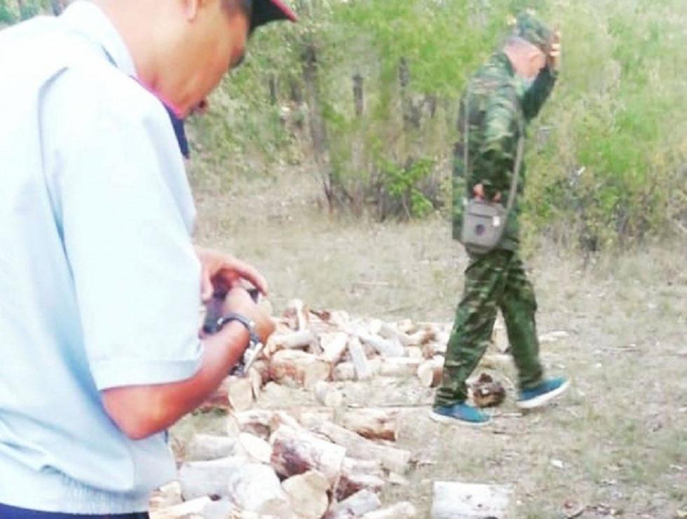 Деревья, срубленные браконьерами в Павлодарской области, оценили в восемь тысяч тенге
