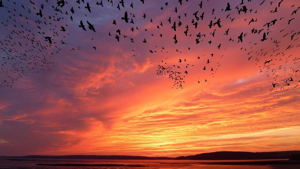 Вакцинацию против птичьего гриппа проведут в Казахстане