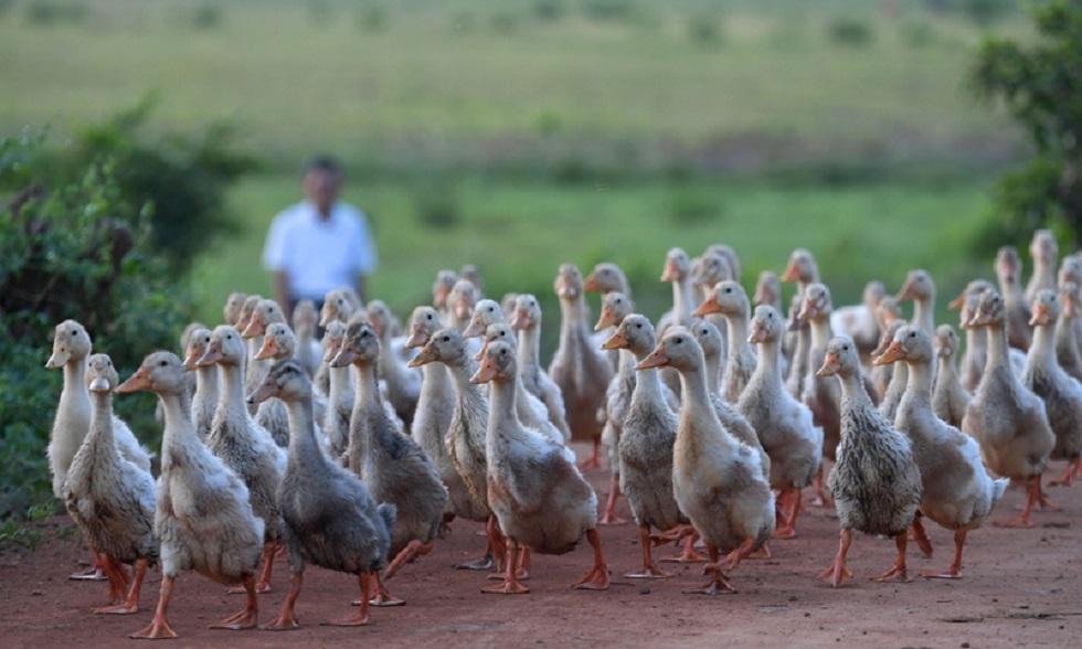 Евросоюз готовится к новым вспышкам птичьего гриппа