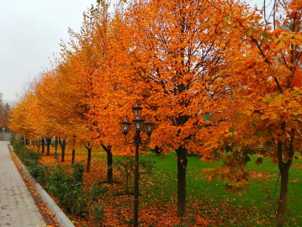 Погода в Алматы с 12 по 18 октября 2020