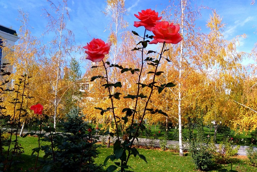 Погода в Алматы с 19 по 25 октября 2020
