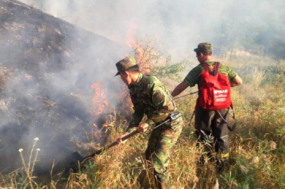 Крупный пожар локализовали в ущелье Алма-Арасан