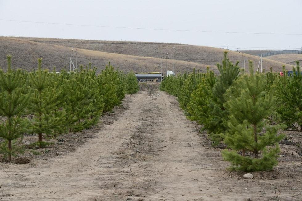 Алатау ауданының аумағындағы жасыл желек жыл соңына дейін 2 есеге дейін көбейеді