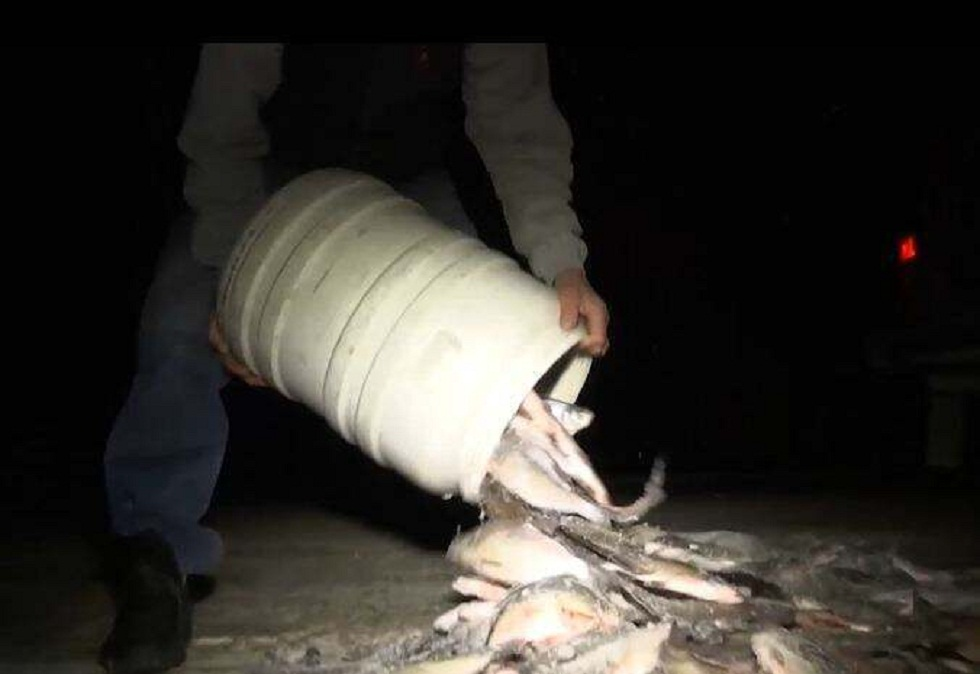 Алматы облысында 130 келі торта балық тәркіленді