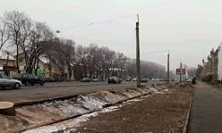 Алматы прокуратурасы заңсыз ағаш кесу фактісі бойынша тергеуді бастады