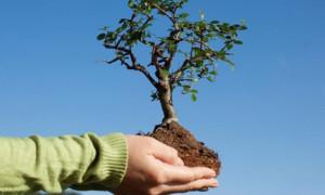Акимат Алматы приглашает общественников, журналистов и неравнодушных жителей принять участие в посадке деревьев на ул. Толе би