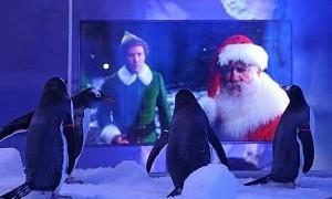 Чтобы не скучали: пингвинам в аквариуме начали показывать новогодние фильмы